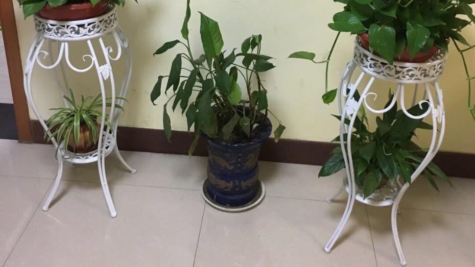 单个白色花架